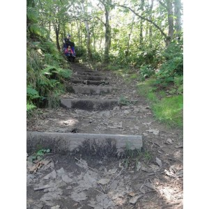 Stepped woodland path